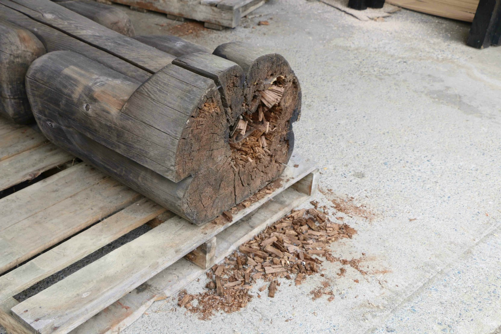 The base of Eagle Raven Bear, showing damage to wood, May 2016.
